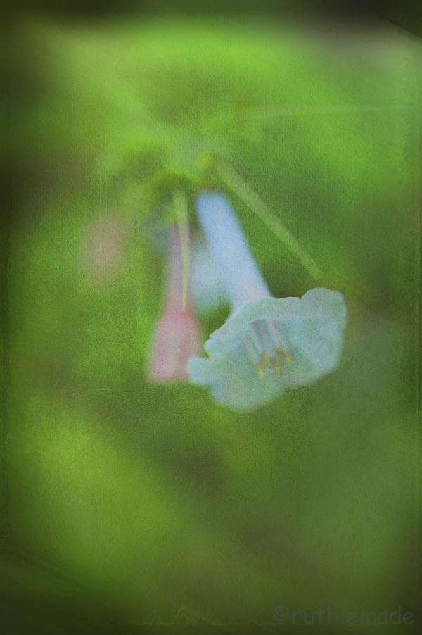 Texture Flower 12