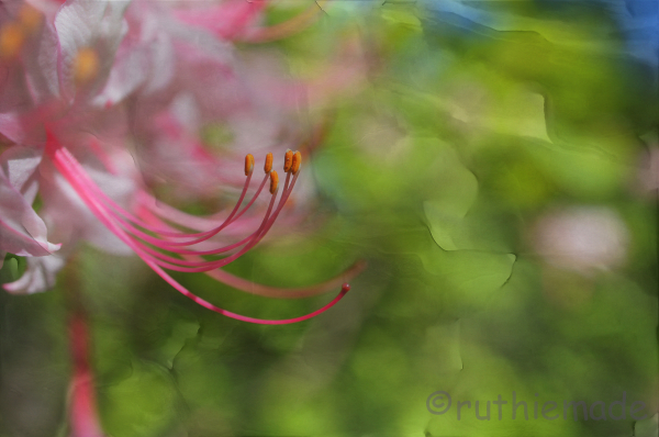 Texture Flower 15