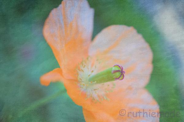 Texture Flower 16