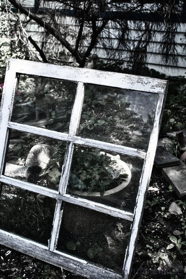 B&W Window Garden