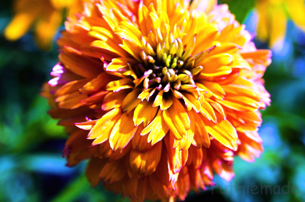 Flower in Sun