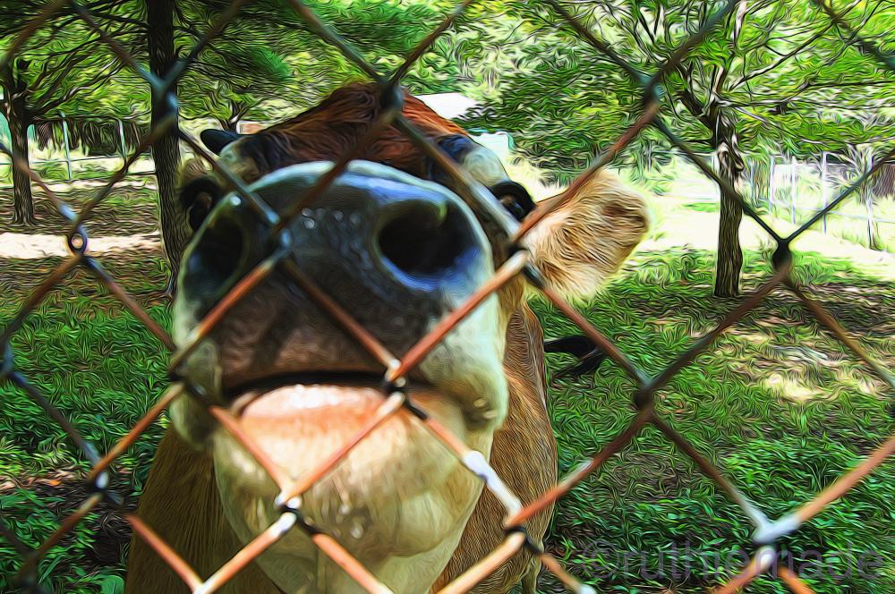 ST Old Catskill Game farm 6