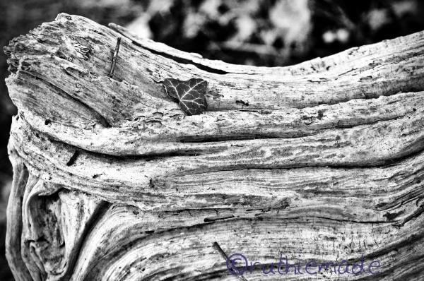Leaf on log