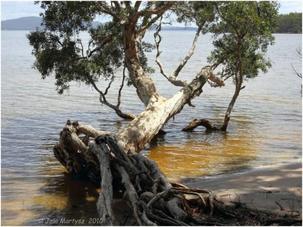 tree, water, nature