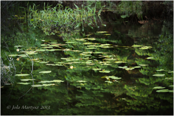 Green reflection with leafs and water plants pond
