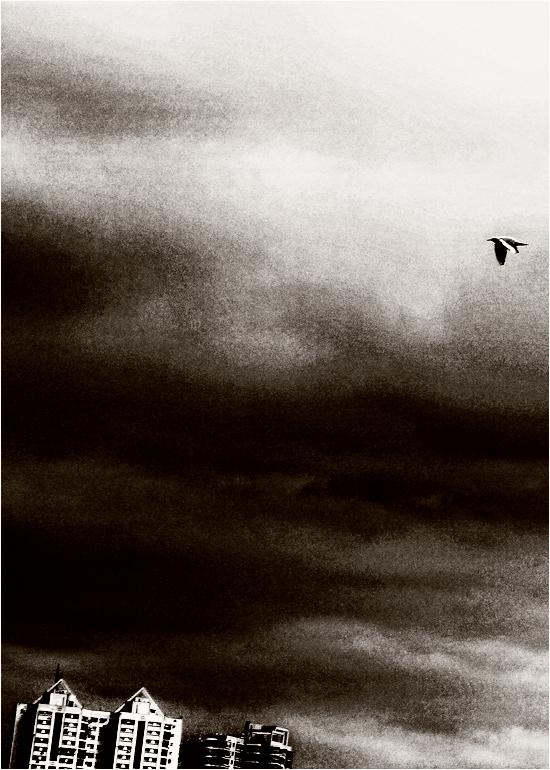 Skyline Pigeon