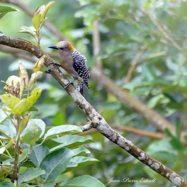 Costa Rica 116