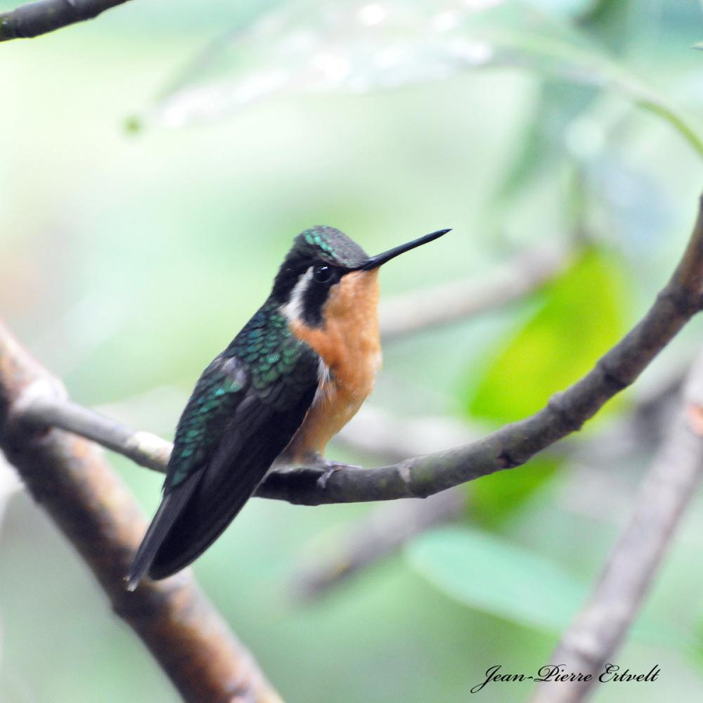 Costa Rica 125