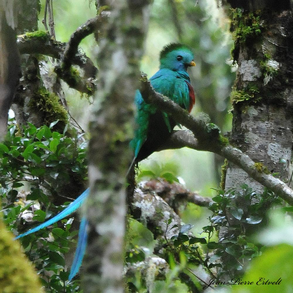 Costa Rica 208