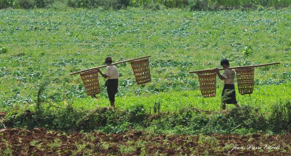 Myanmar 136