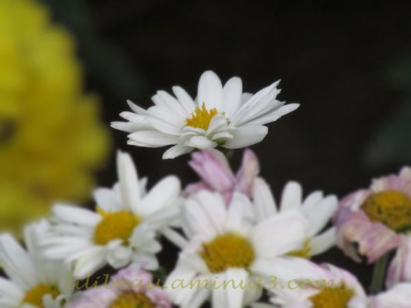 Fleur d'automne #03