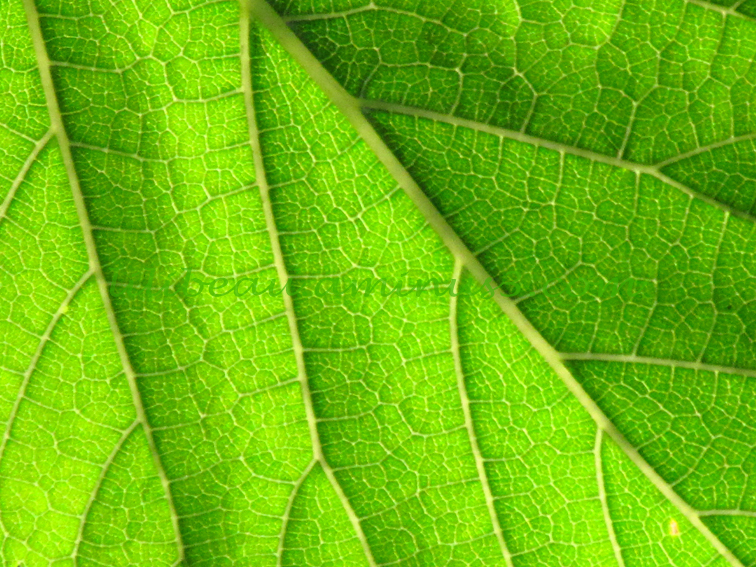 Toujours Vert