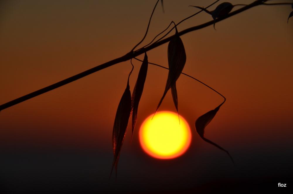 saisir le soleil...