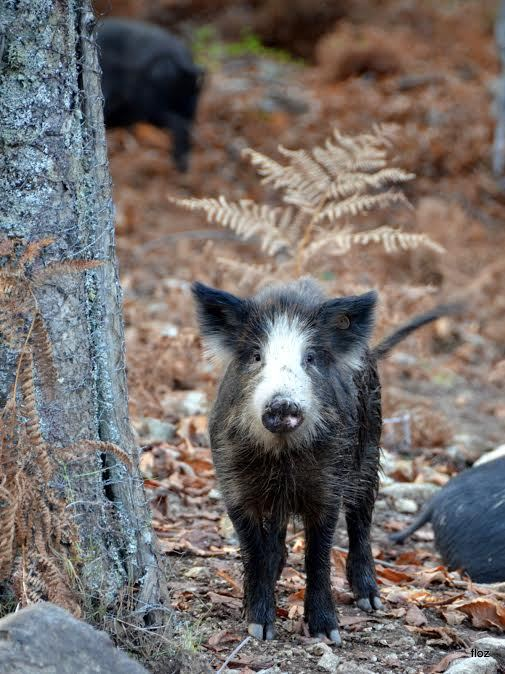 eh bien mon cochon!