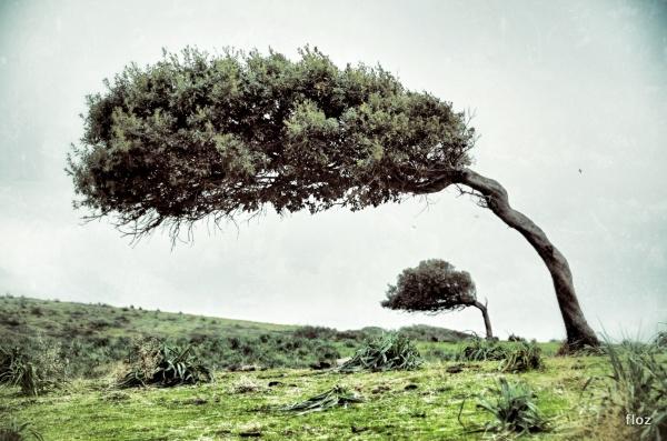 un albero chiamato vita