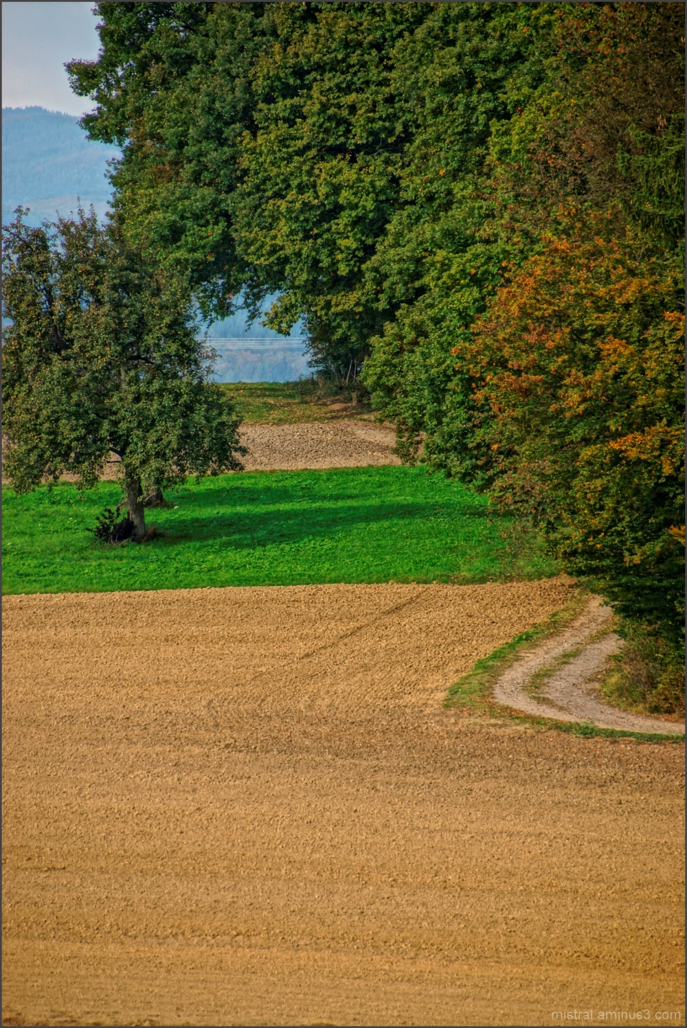 Le chemin au bord du champ