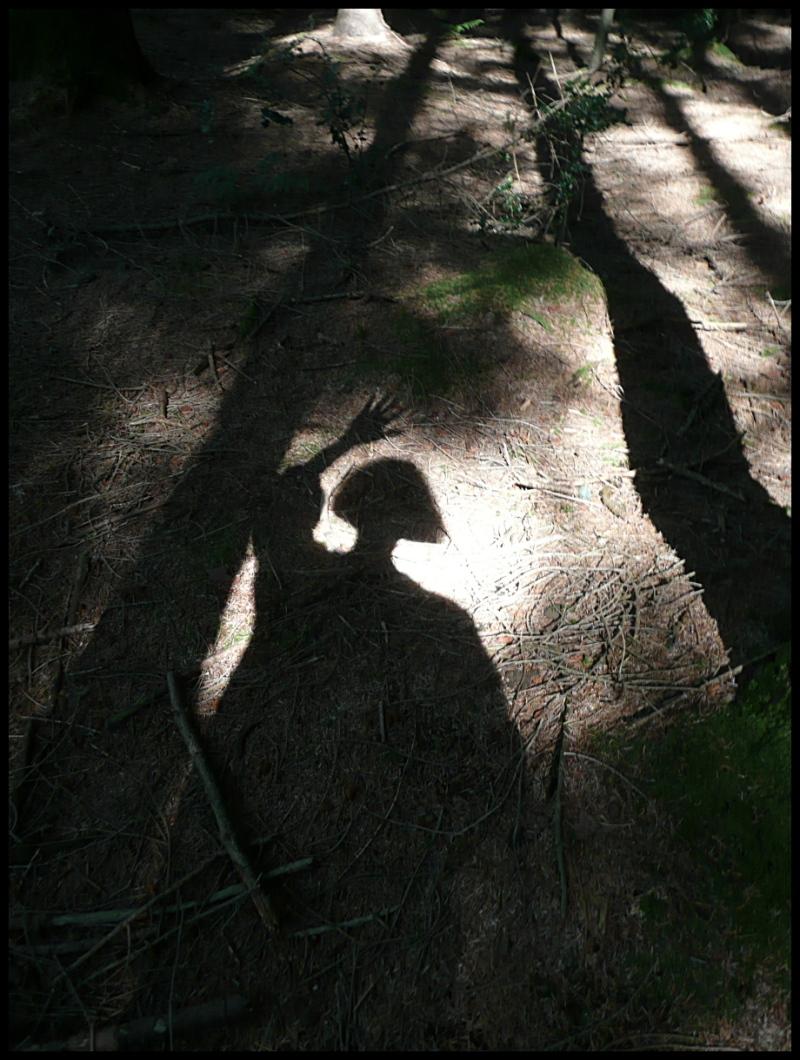 Dédiée à  Sue-Ann...  Ombre à la forêt (ou forêt à l'ombre ?).