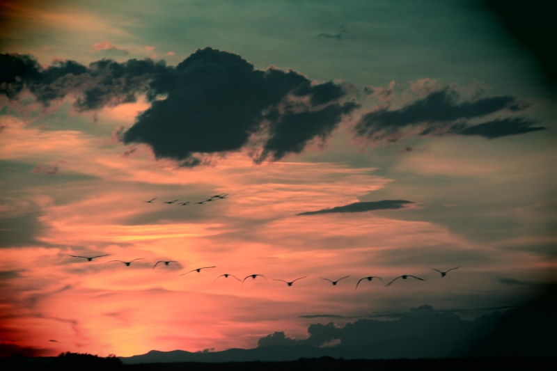 Vol de Flamands Roses au Coucher de Soleil