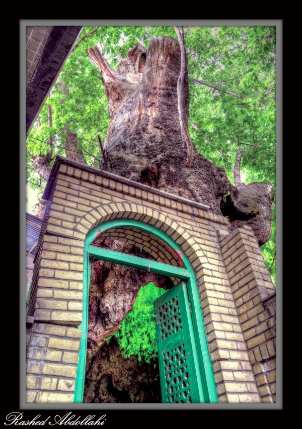 The Tree's Door