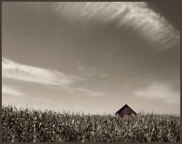 petite remise rouge isolée dans un champ