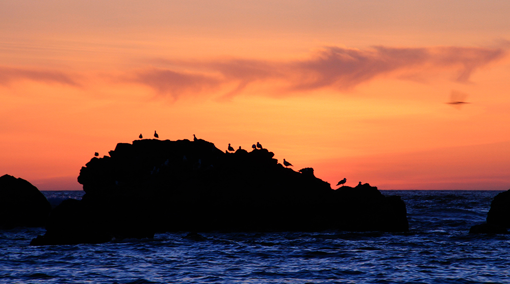 birds on rocks