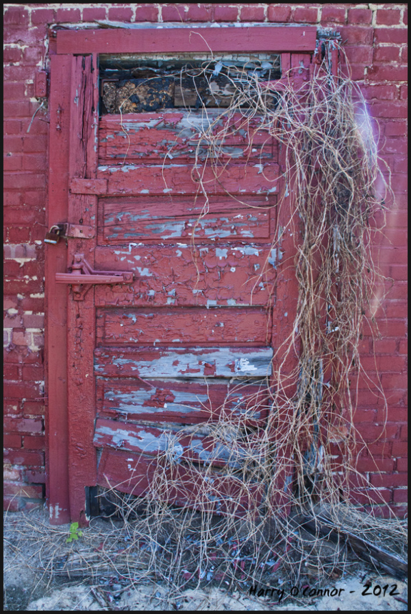 Red door with vines