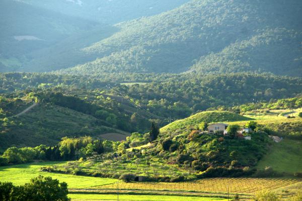 Entre vignes et garrigue