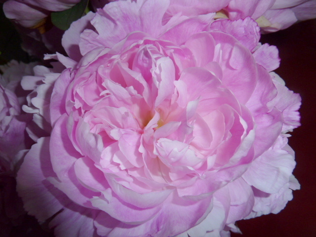 Vive la vie en rose !