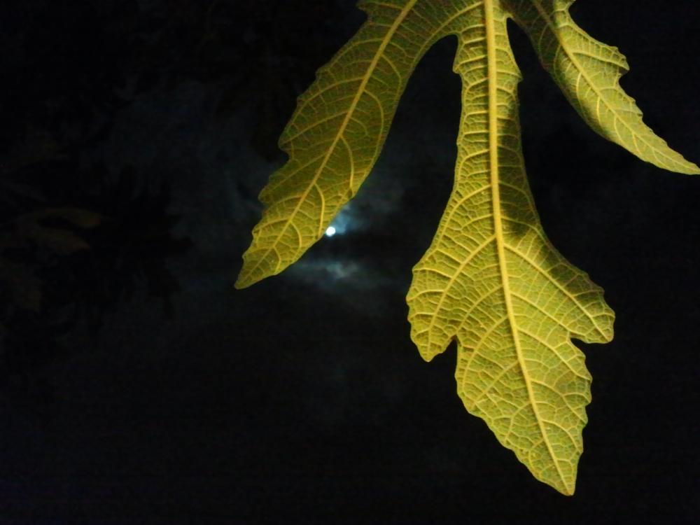 old leaf & autumn moon