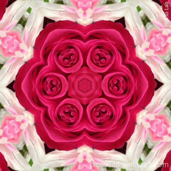 Pink Rose Kaleidescope