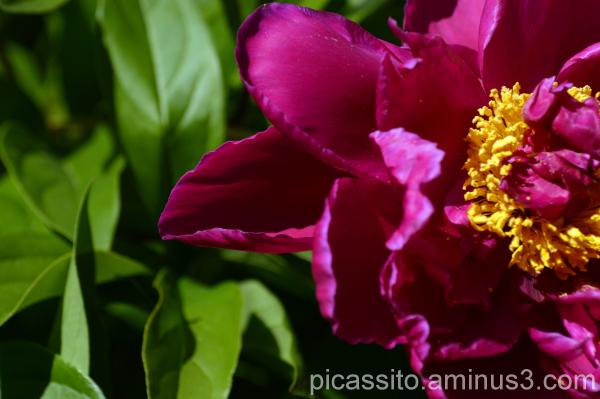 Fushia Beauty