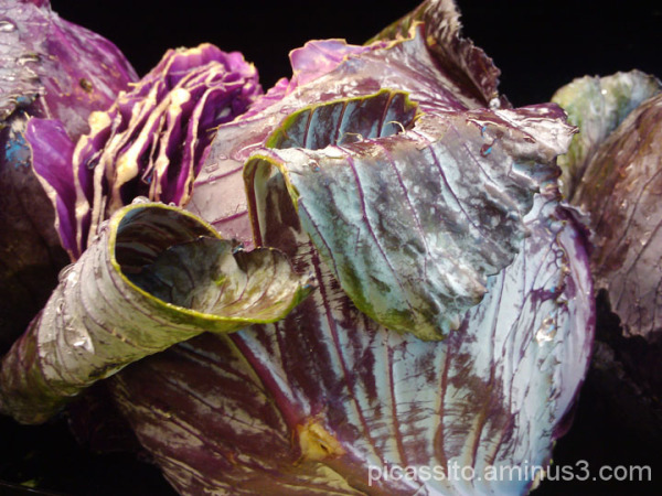 Royal Radicchio