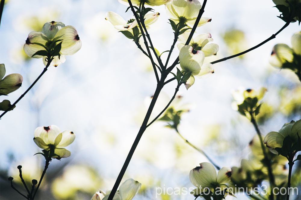 Yellow Petals on Delicate Branches