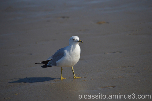 Seagull in Thought
