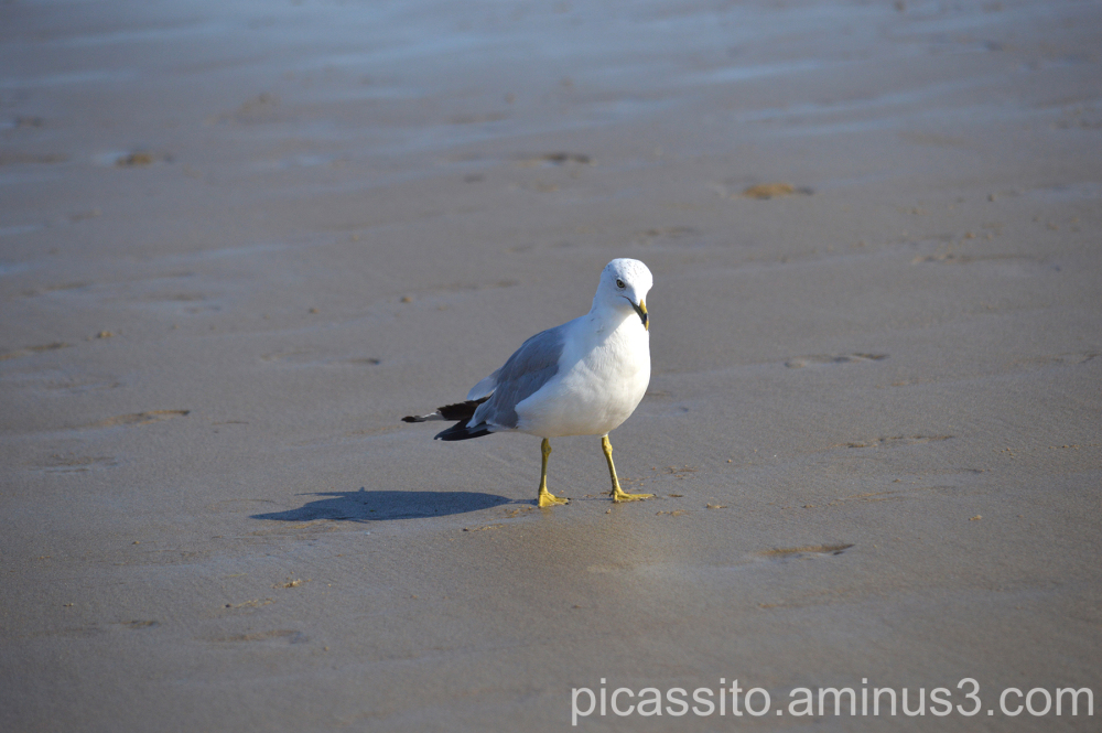 The Demure Seagull