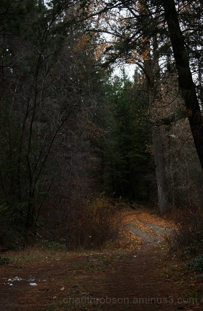 Shaded trail.