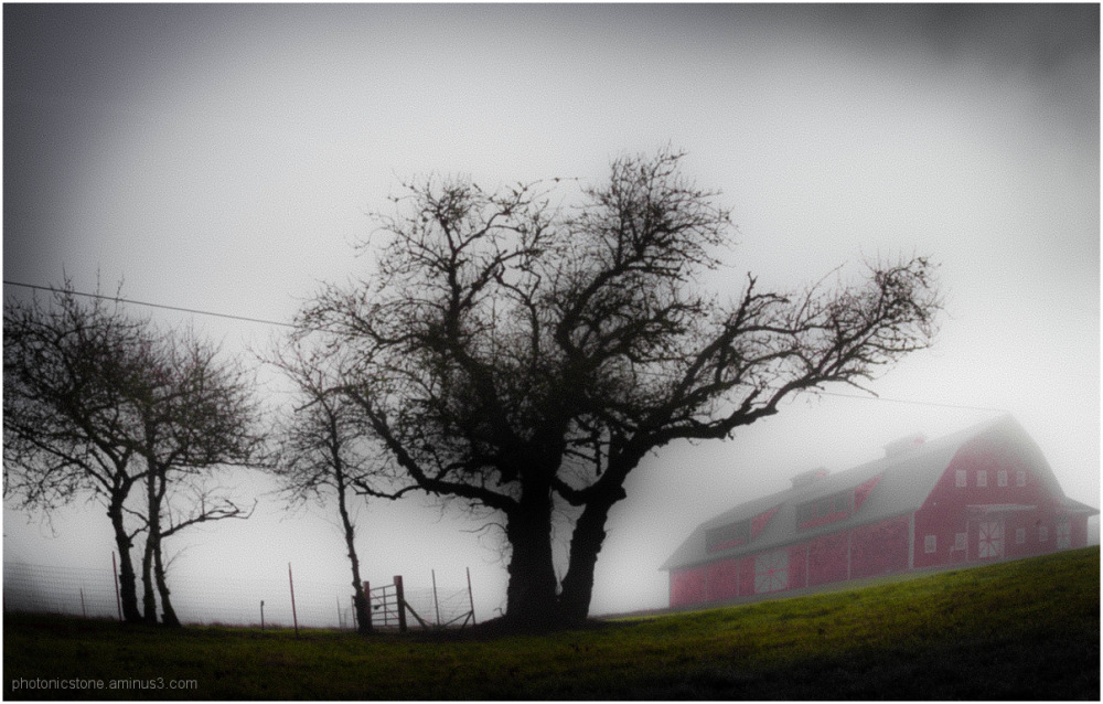 Fog & Red Barn Dream ..