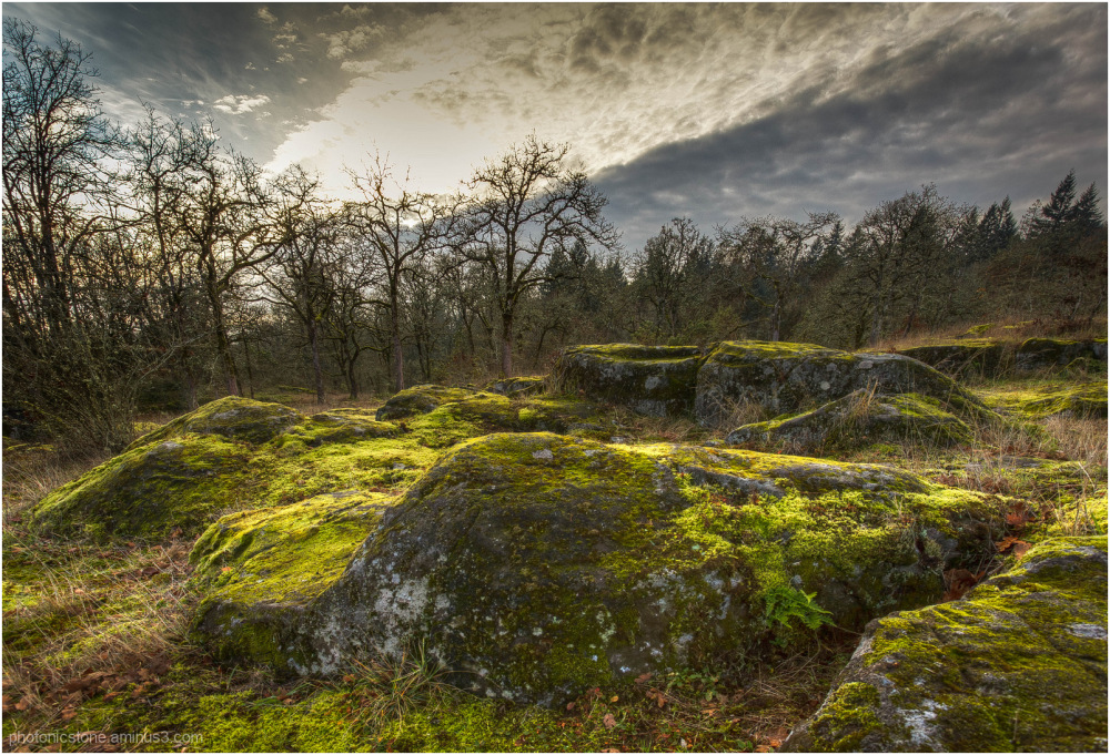 Last Light on Mossy Rocks