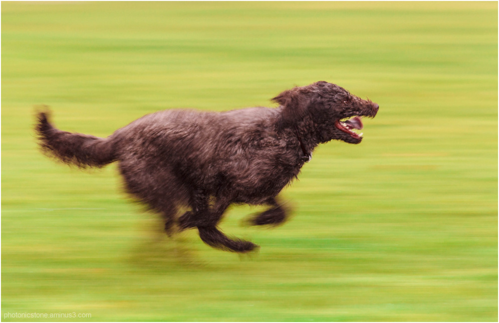 Dog Speed Energy Focus