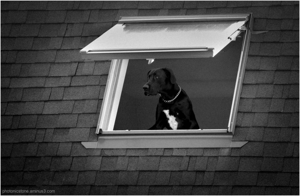 Anxious Surveyor ..