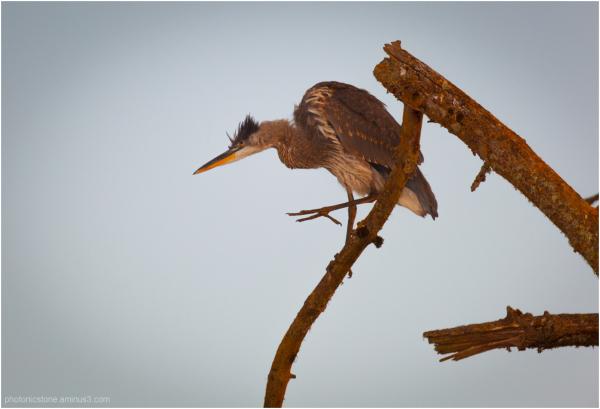 Morning sun on feathers