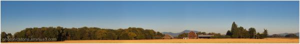 Barn and wheat