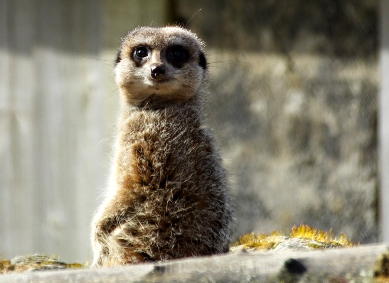 Looking At Me ???.