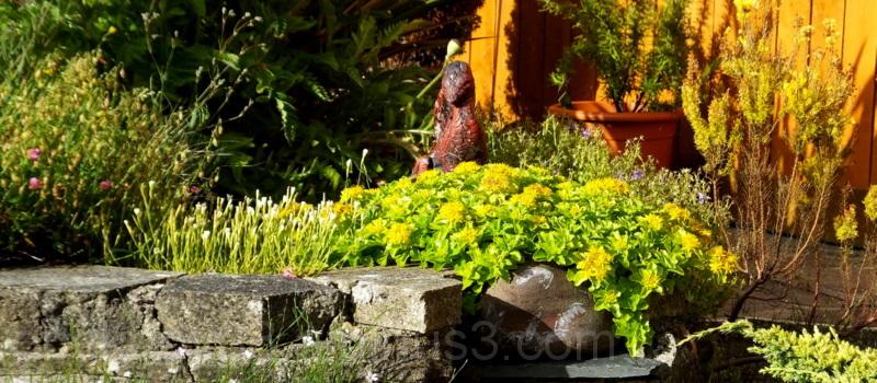 Pat's Garden .5.