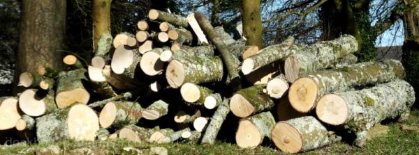 Deconstructed Woods .2.