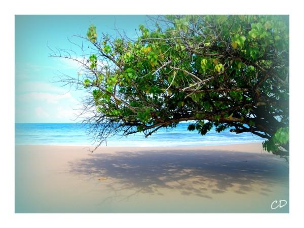Du côté de Deshaies (Guadeloupe)