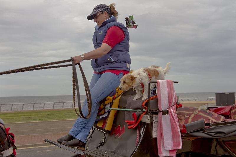 Blackpool Carriage Dog