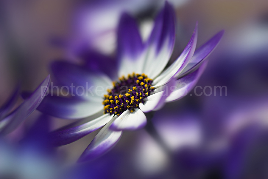 Macro image of Garden Flower