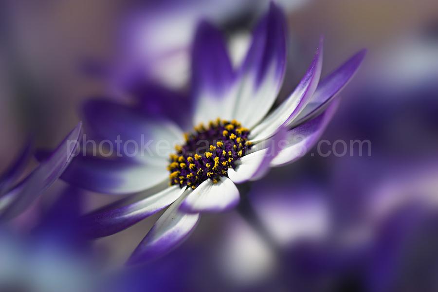 Macro image of Garden Flower