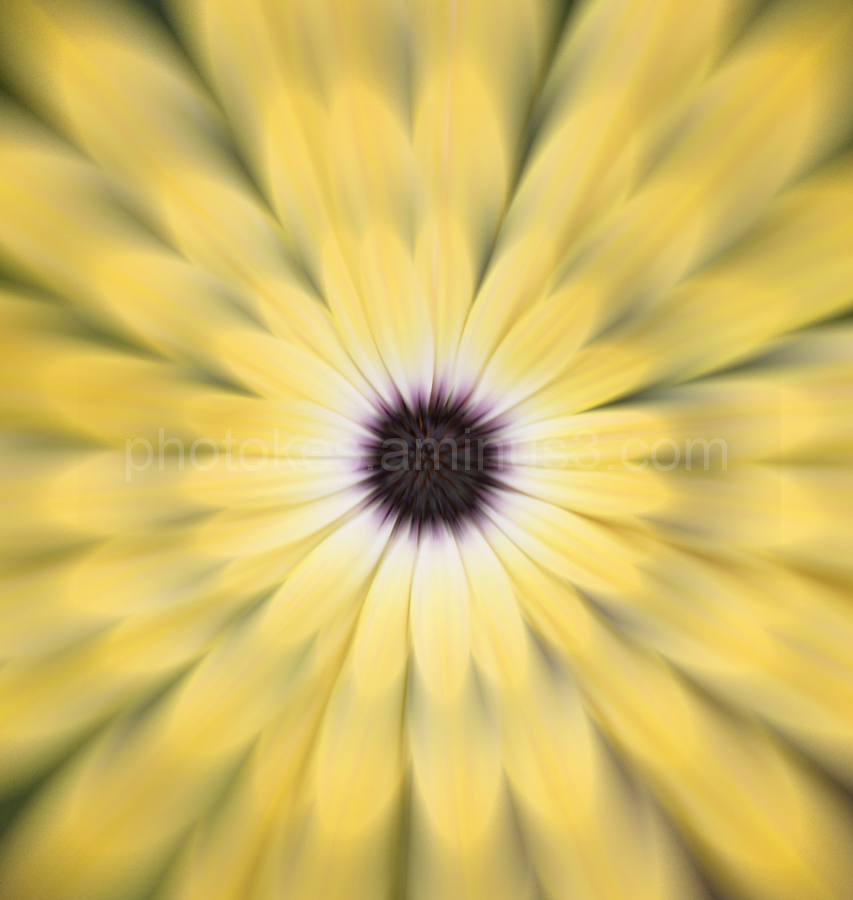 Abstract image of a flower bloom